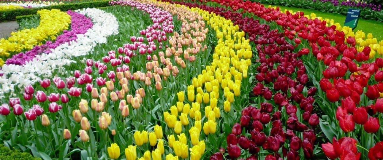 Image result for Dalat Flower Gardens""